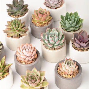 wholesale home indoor decorative plastic artificial succulent pot plants garden decor cheap succulents