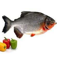 Good quality sea food red pomfret fish frozen price
