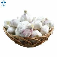 Low Price Fresh Garlic for Wholesale