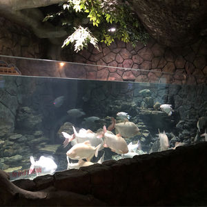 large plastic fish tank
