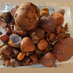 80/20 Cow/Ox/Cattle Gallstones for Sale