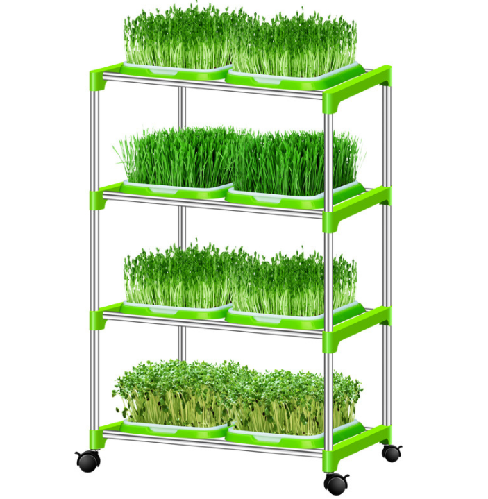 High quality Microgreen seeds Alfalfa seeds for sprouting vegetable