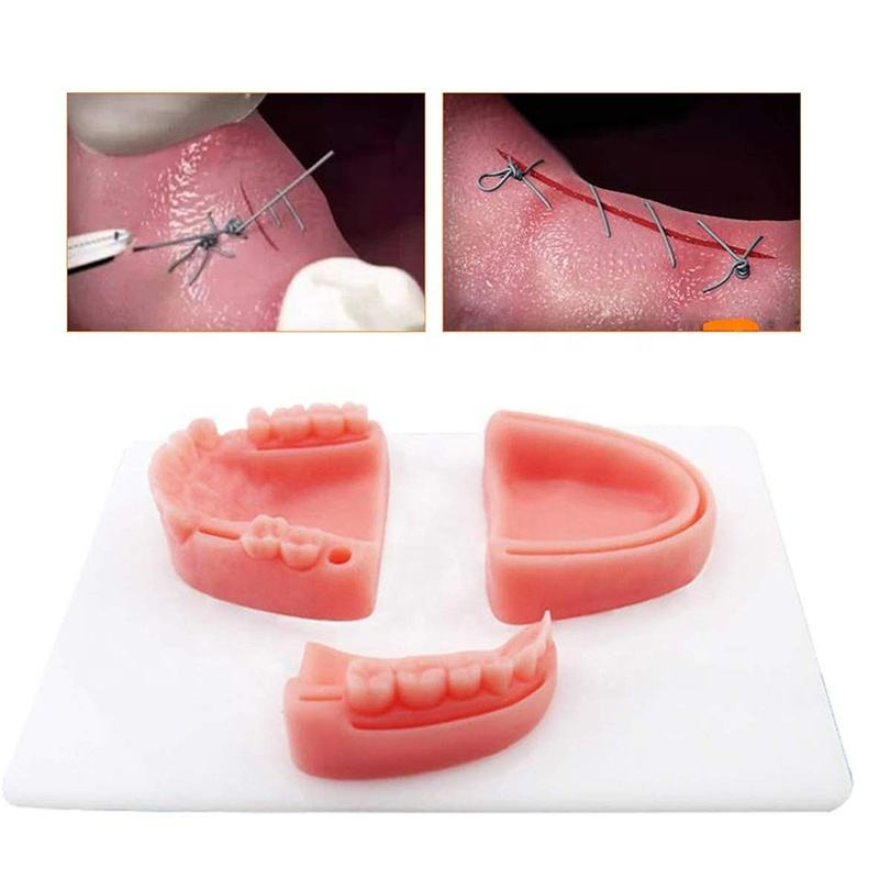 dental suture practise model