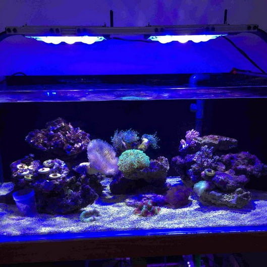 Aquarium licht item type CTLite G4 ce aquarium led verlichting voor koraalrif