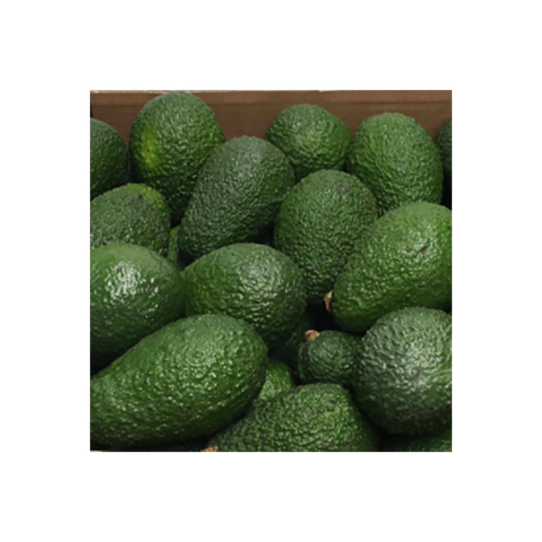 Wholesale import export fresh healthy fruit raw hass avocado products price