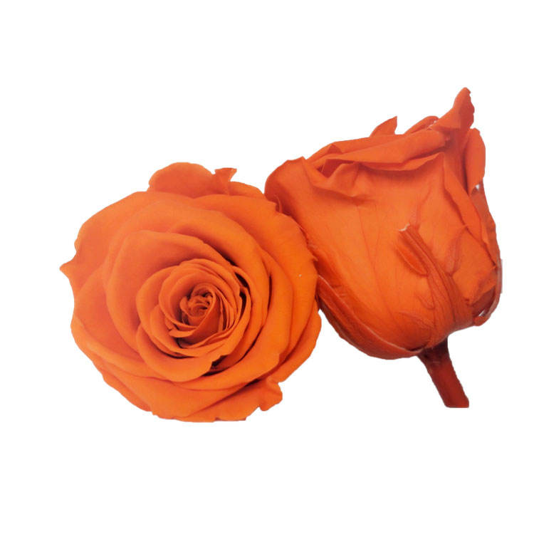 5-6 CM fresh real touch feel rose immortal Preserved Rose head For Wedding Decoration