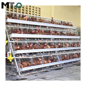 Poultry farming equipment suitable for chicken layer cage of small farms