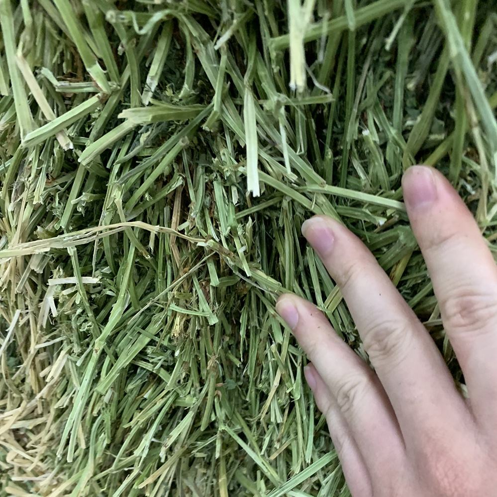 Top Quality American Alfalfa Hay Bales for Animal Feed
