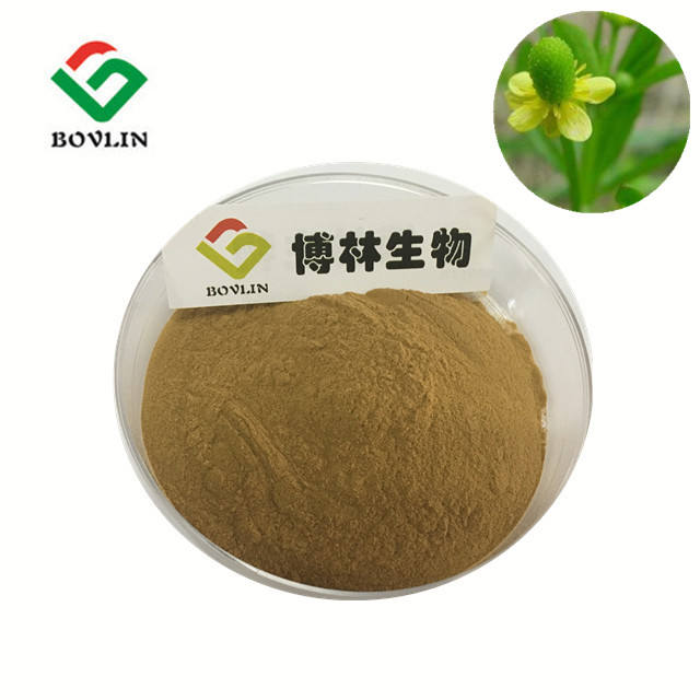 Bolin Factory Supply Natural Catclaw Buttercup Root Extract,Catclaw Buttercup Root Tuber Extract Powder