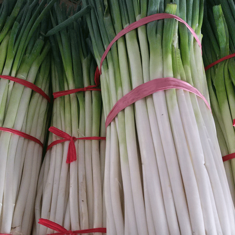 Wholesale Fresh Spring Green Chinese Onion With Best Price