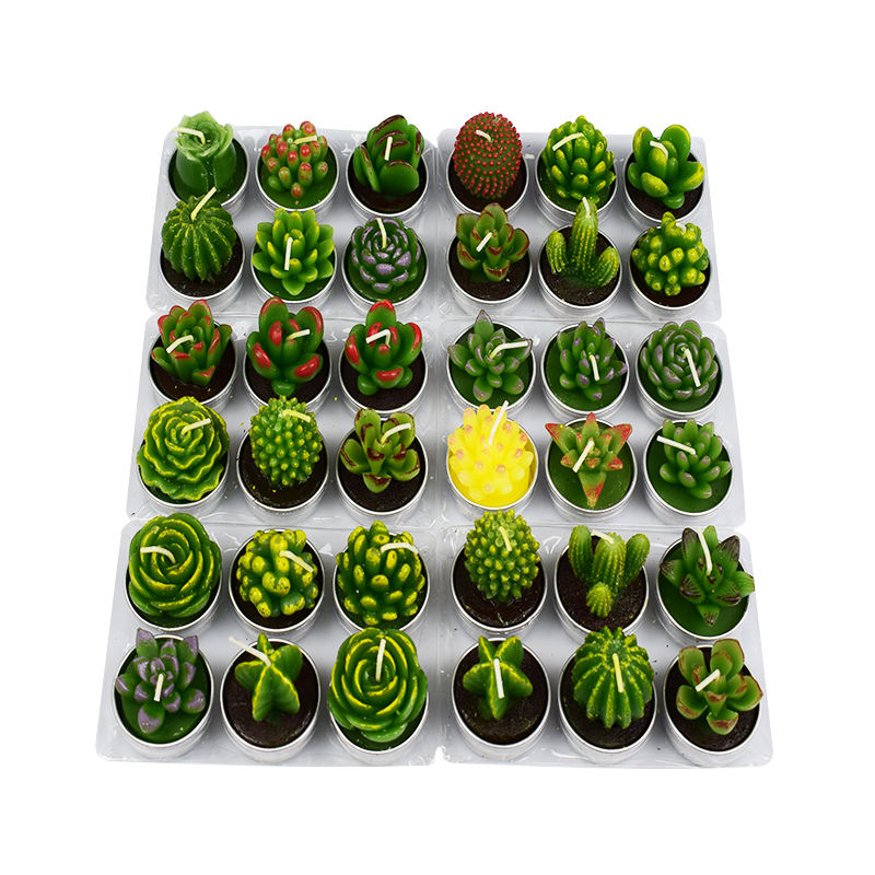 Mini green succulent plants tealight candles for home decoration wedding party