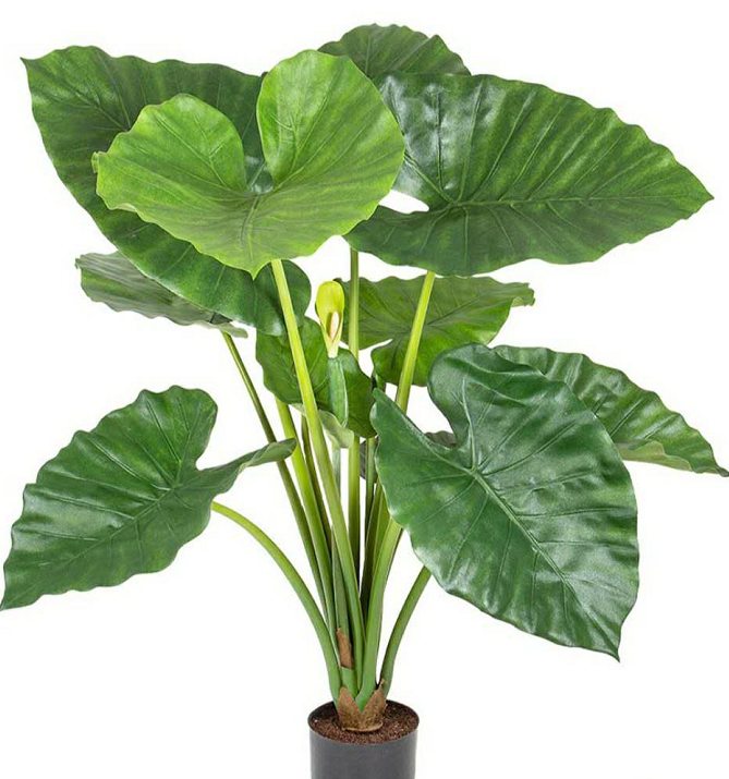 China Large Indoor Plants Trees China Large Indoor Plants Trees Manufacturers And Suppliers On Alibaba Com