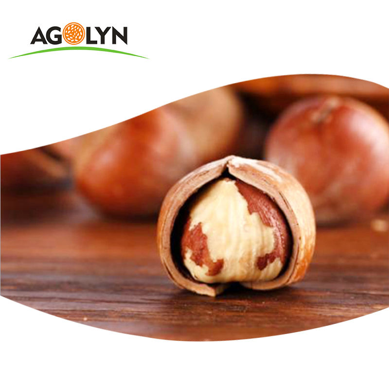 Bulk the highest grade purified Hazelnuts in shells