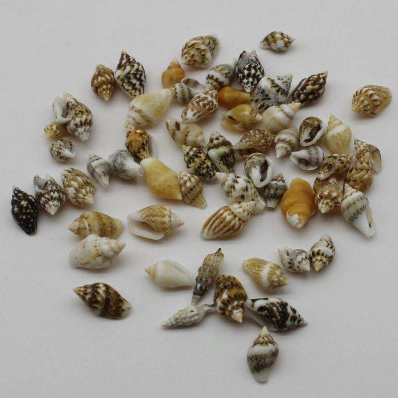 Beautiful 3D Loose Multi Style Mix Assorted Shells 6-16mm Miniature Sizes Cute for Craft Decoration Makings