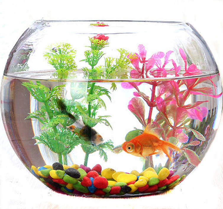 Wholesale New Design and High Quality Ball Shaped Glass Planter and Fish Tank with Different Sizes