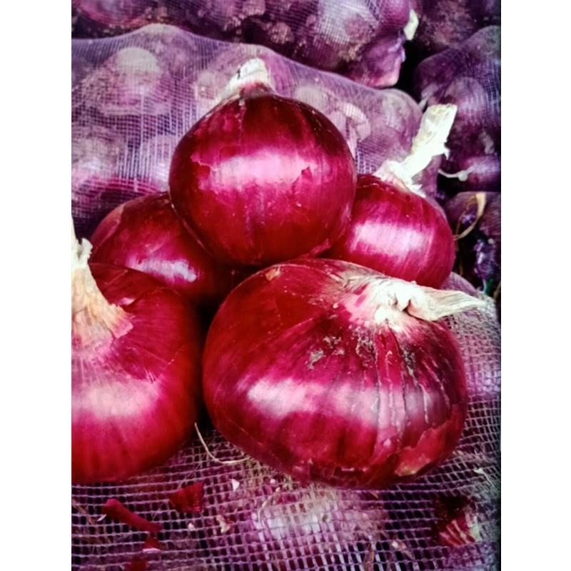 Healthy Chinese Wholesale fresh onion
