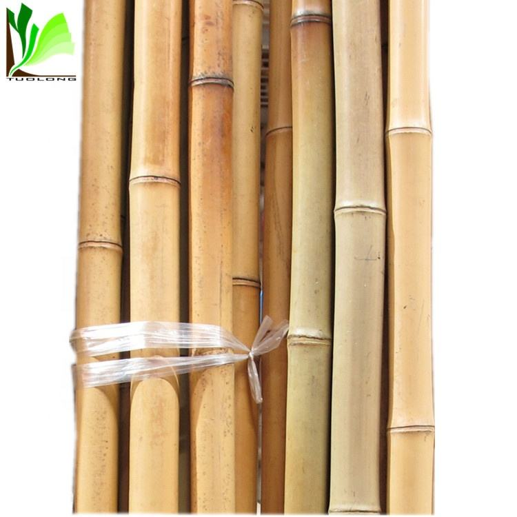 Pole Good Quality Raw Practical Darwin Bamboo Suppliers