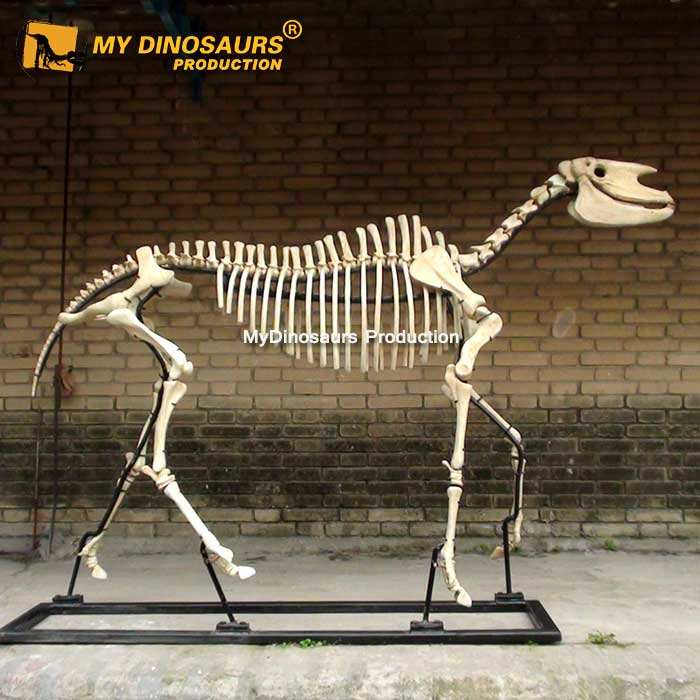 MEIN Dino DS725 Tier Skeleton 3d Modell Pferd Skeleton