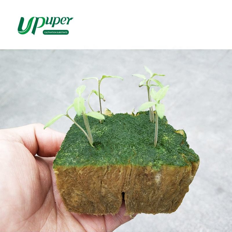 UPuper Cultivation Plug CP36T seeding hydroponic rock wool for indoor hydroponics green house
