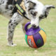 Toys Dog Toy Tpr Toy Colorful 8 Inch Basketball Pet Toys Durable TPR Balls Dog Basketball Toy