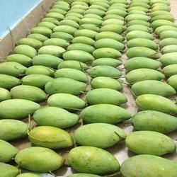 High Quality Fresh Fruit Haden Mango
