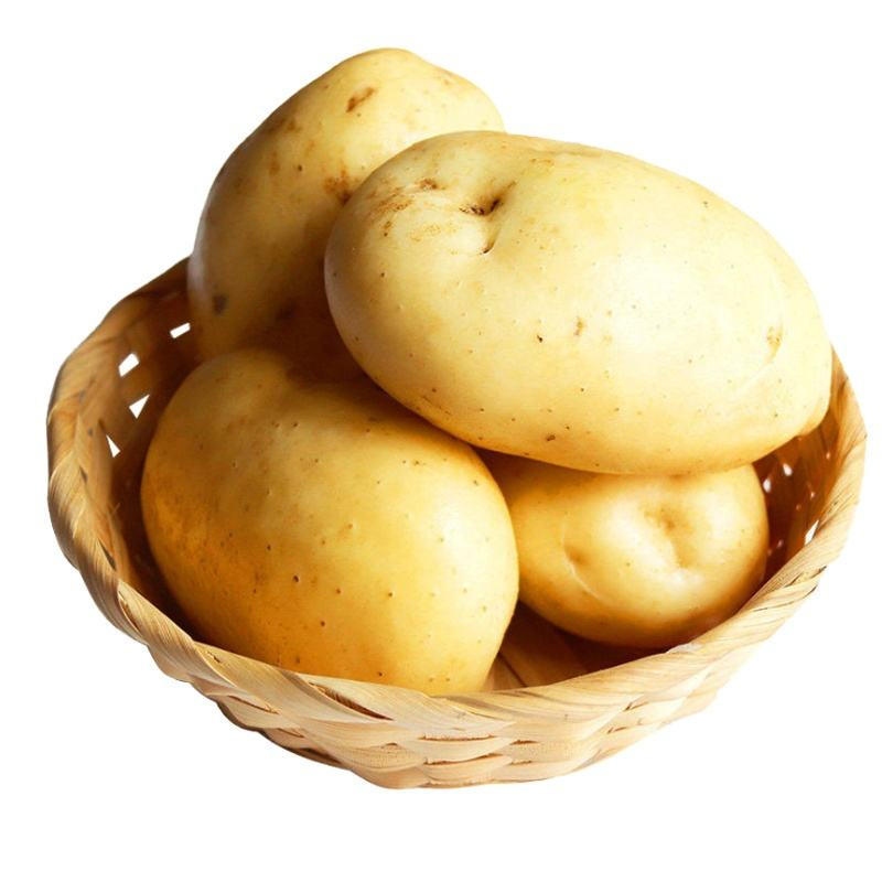export fresh potato wholesale bulk sweet fresh potato supplier