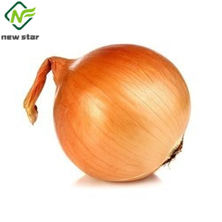 Chinese Fresh Yellow Onion With Good Quality And Low Price