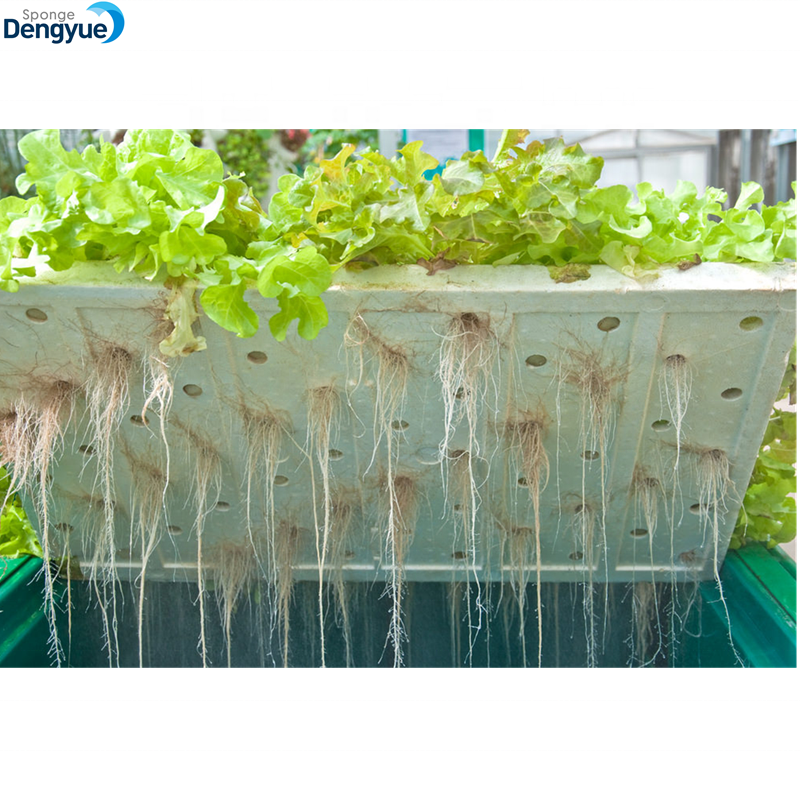 Hydroponic vegetables farm cultivation plant water culture Foam Seeding Trays