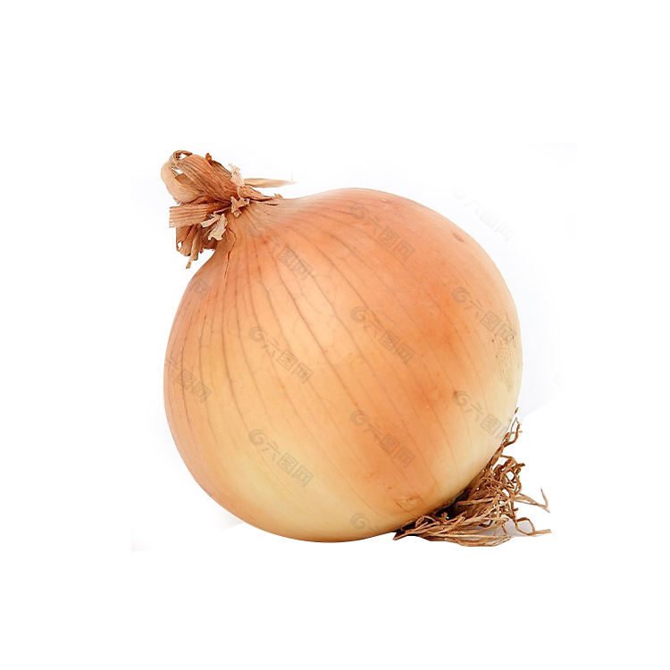 High Quality Round fresh red/yellow/white onions at Export Price