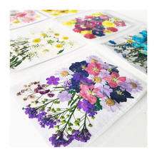 Promotional Sets Dried Flower Embossing Wholesale Dried Flower Nail PatchIns Popular Press Flowers