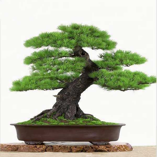 bonsai artificial air bonsai table small plant pots artificial indoor or outdoor