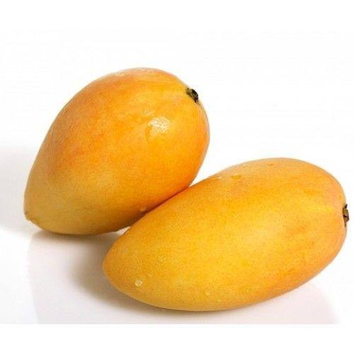 Vietnam fresh mango meet Global Gap standards for export to many countries around the world made in Vietnam