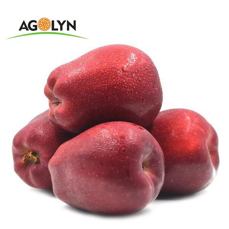 Berbulu Juicy 70 Mm Ukuran Besar Asal China Huaniu Apple