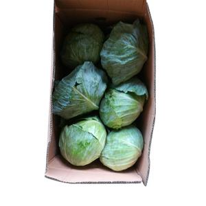 Factory direct sales of fresh vegetables delicious crispy cabbage