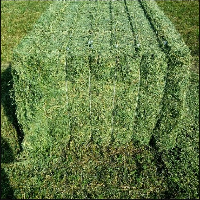Best Selling High Quality Alfalfa Hay Top Grade Sun Cured Green Alfalfa Hay For Sale