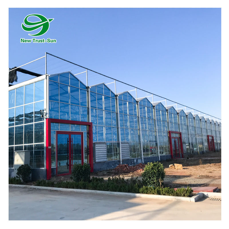 Venlo Type Multi-span Glass Agricultural Greenhouse Hydroponic Growing Systems