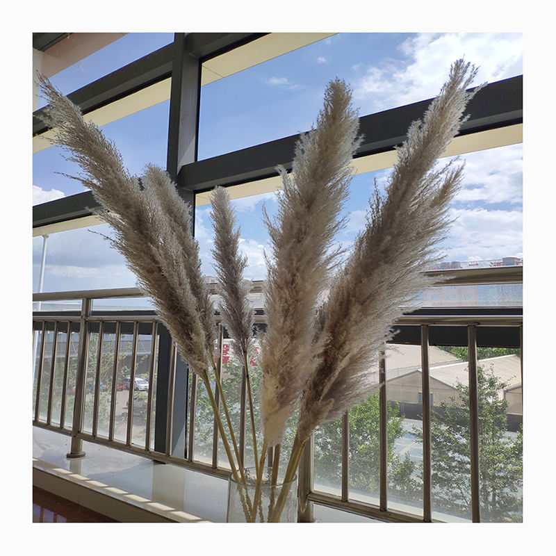 Hot sale dried natural pampas grass for wedding decoration