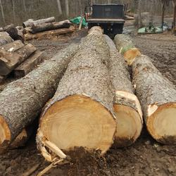 pine log wood /pine wood timber/pine sawn timber