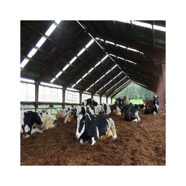 high strengthen easy install prefabricated cattle farming barn cow hangar shed with steel structure workshop