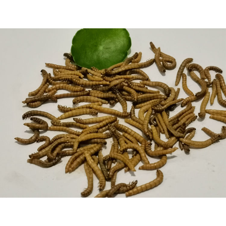 2020 Hot Sale Widely Used Superior Quality Meal Fish Bird Food Mealworm