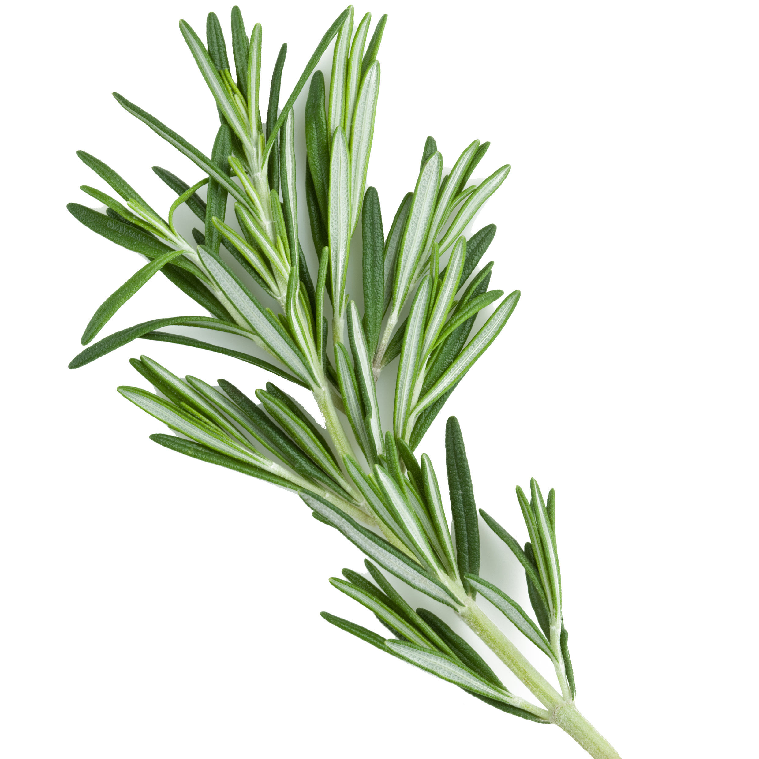 Beauty Product hair growth Product Rosemary Essential oil