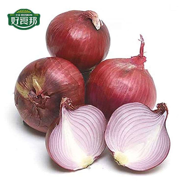 Wholesale Fresh Onion Red Onion Export Price