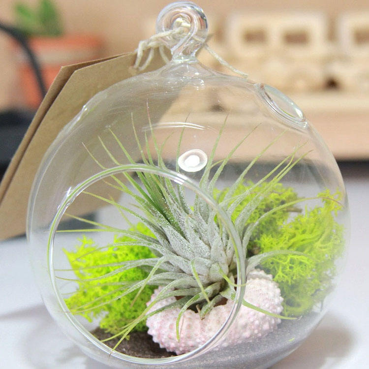 clear hanging glass bauble terrarium decorative glass orbs