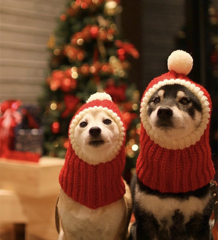 Knitted red pet Christmas clothes accessories dog costume hat Pet Autumn Winter Wool Knitted Hat Dot Cat Warm Red Christmas Hat