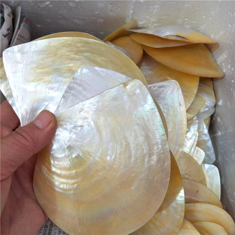 Factory direct Sale Natural Polished Shell black yellow Mother Of Pearl Shell 11cm