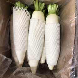 China new season white radish /Shandong fresh vegetable export