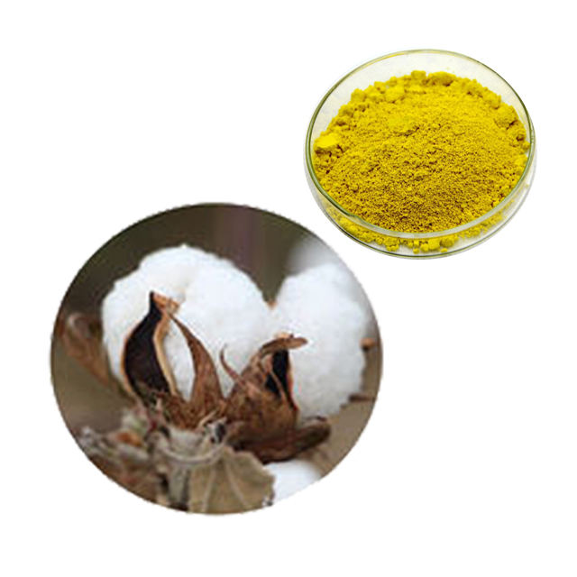 Free sample natural Cotton Seed 98% L-gossypol acetic acid