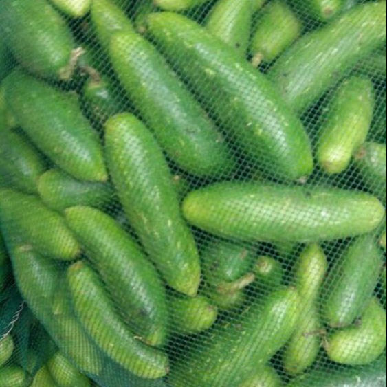 Indian Tindora Vegetable / Tendli