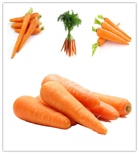garlic peeled Chinese price fresh carrots for sale carrot manufacter