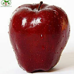 New Harvest red delicious apple top quality